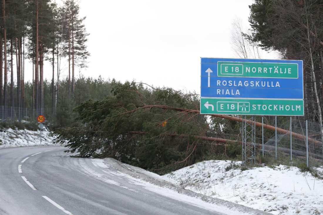 Nedfallna träd till följd av stormen Alfrida utanför Norrtälje.