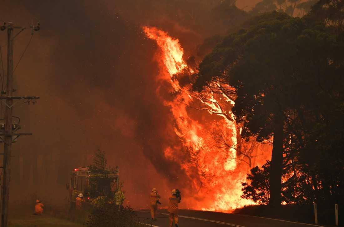 Bild från en brand nära samhället Bilpin, 90 kilometer nordväst om Sydney i New South Wales i Australien.