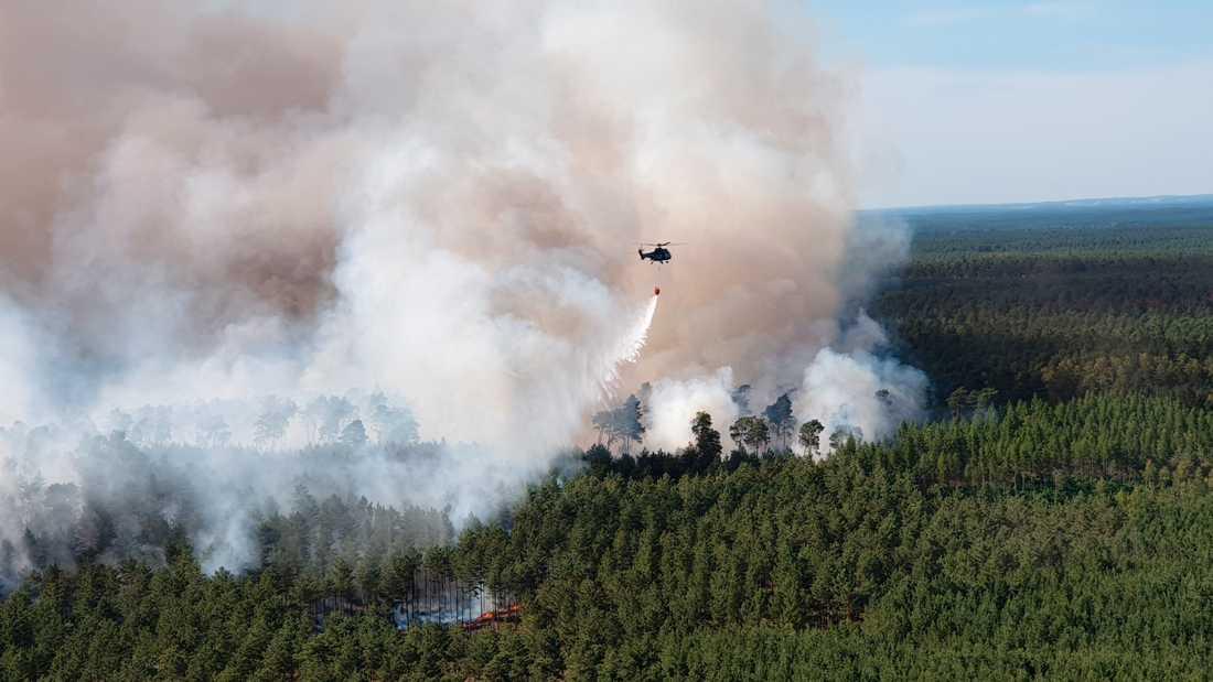 900 miljoner hektar ny skog – motsvarande 20 stycken Sverige eller ett helt USA – skulle kunna suga upp två tredjedelar av alla de koldioxidutsläpp som människan ligger bakom och bidra i kampen mot klimatkrisen, visar ny forskning. Bilden visar en skogsbrand i Tyskland i juni 2019.