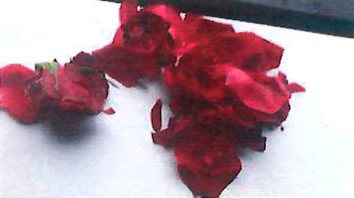 Den misstänkte mannens bild av rosen efter att han rivit sönder den.