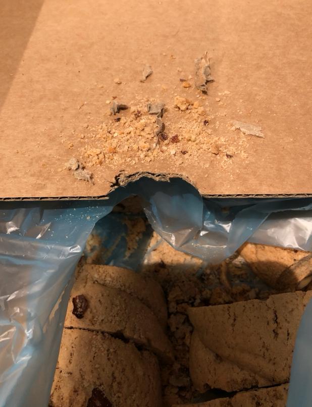 Råttorna tuggade på inredningen och matförpackningar. De bajsade även i lokalerna.