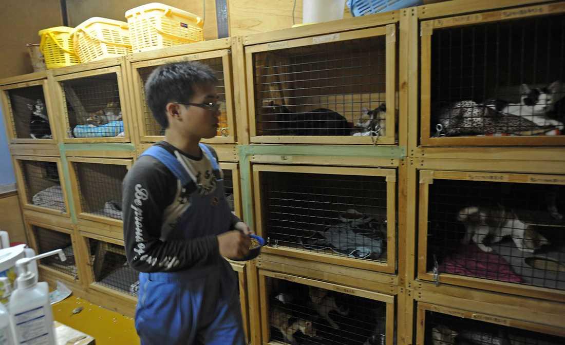 Organisation Lifeboat har räddat tusentals hundar och katter från gaskamrarna.