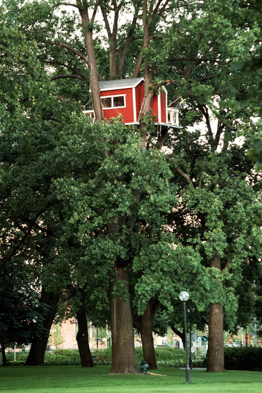 Här kan du se att Hotell Hackspett uppe i ett träd.