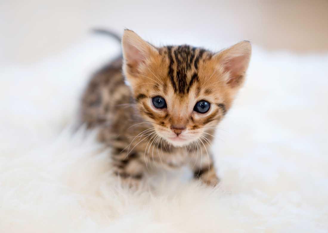 Kattungen som hittades i soptunnan var vid liv och togs om hand. Nu blir det ett djurskyddsärende för länsstyrelsen, rapporterar P4. Arkivbild.