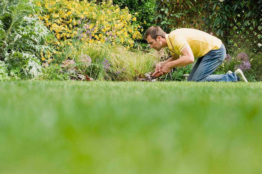 Modellen är inte att döda mossan utan snarare stärka gräset.