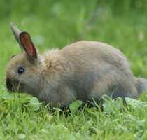 """""""Ett enkelrum, tack"""" Snart är det dags för nio kaniner att flytta in på Augustenborgs kaninhotell."""