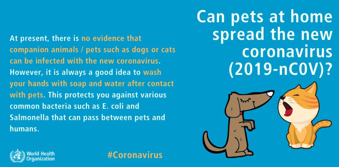 Husdjur kan inte sprida coronaviruset.
