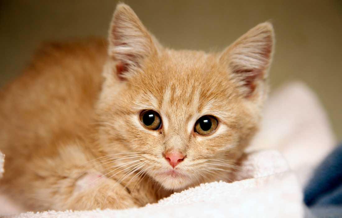 Kattungen på bilden har ingenting med händelsen att göra.