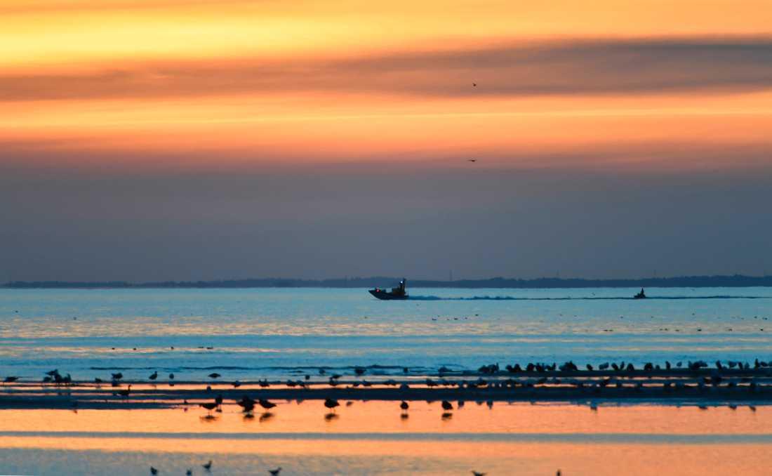 Sjöräddningen letar efter Kim Wall på svenskt vatten.
