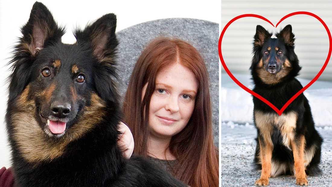 Disa hade en tuff tid i skolan och hoppade av. Hon är en av alla som fått hjälp av hunden Hatti, och nu har hon gått tillbaka till skolan.