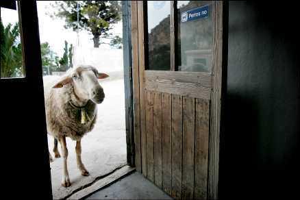 En objuden gäst tittar in i, men enligt dörrskylten är bara hundar förbjudna på krogen.