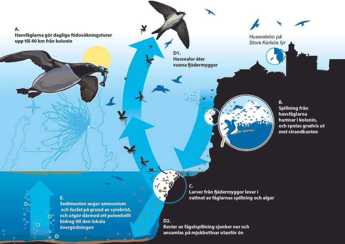 Illustration över öns kretslopp.