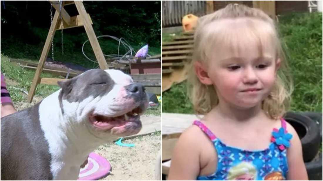 Hunden Penny visade vägen tillbaka.