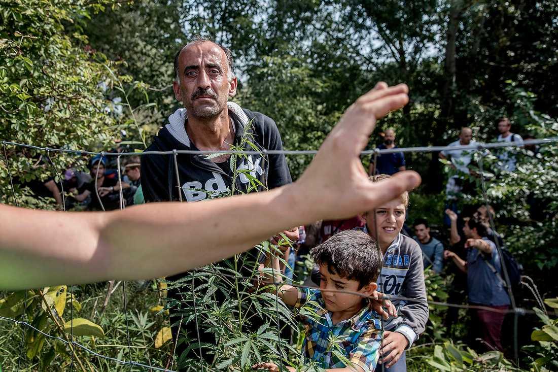 Hit – men inte längre. Många försöker ändå ta sig igenom taggtråden, men bara det senaste dygnet har närmare 400 gripits av ungersk polis.