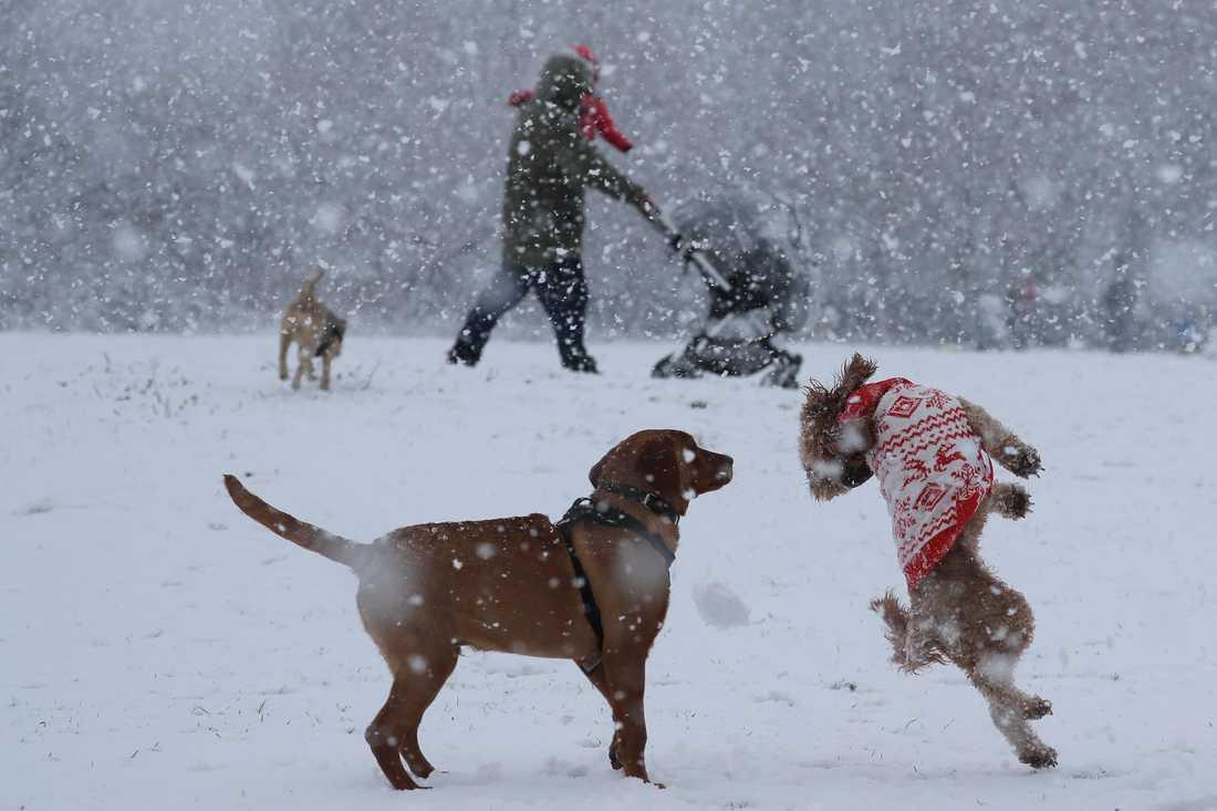 Husdjursbranschen har fått ett uppsving under pandemin. Antalet hundägare ökade under förra året och många satsar mer på sina djur. Arkivbild.