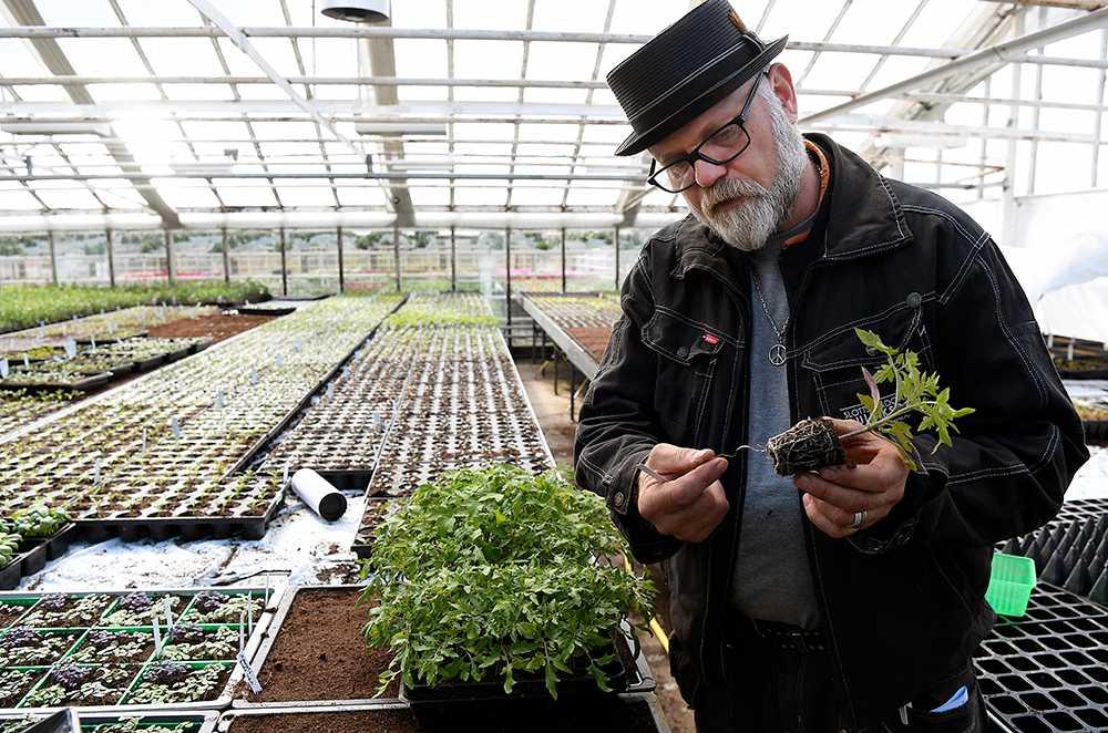 Separera plantorna och plantera om dem i krukor. Använd mer näringsrik planeringsjord.