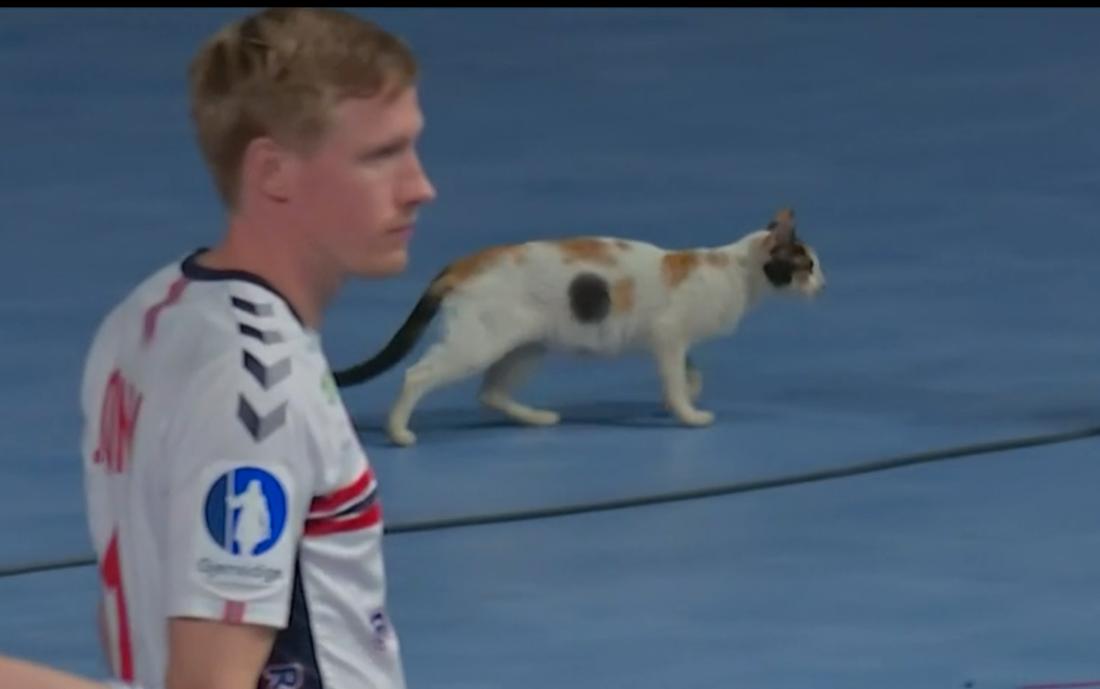 Här dyker katten upp mitt i VM-matchen.
