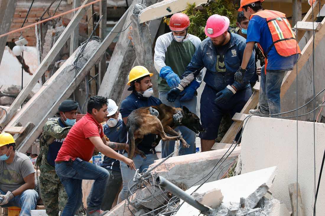 Hundar används för att lokalisera barn i rasmassorna i Enrique Rebsamen skolan.