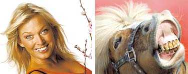 Häst - Linda Isacsson