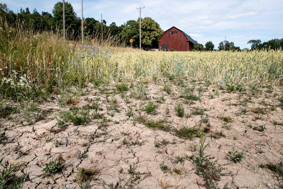 """""""Att vi har haft varm luft i Sverige under en sommar kan handla om slumpen"""", säger Eva Strandberg, meteorolog på SMHI."""