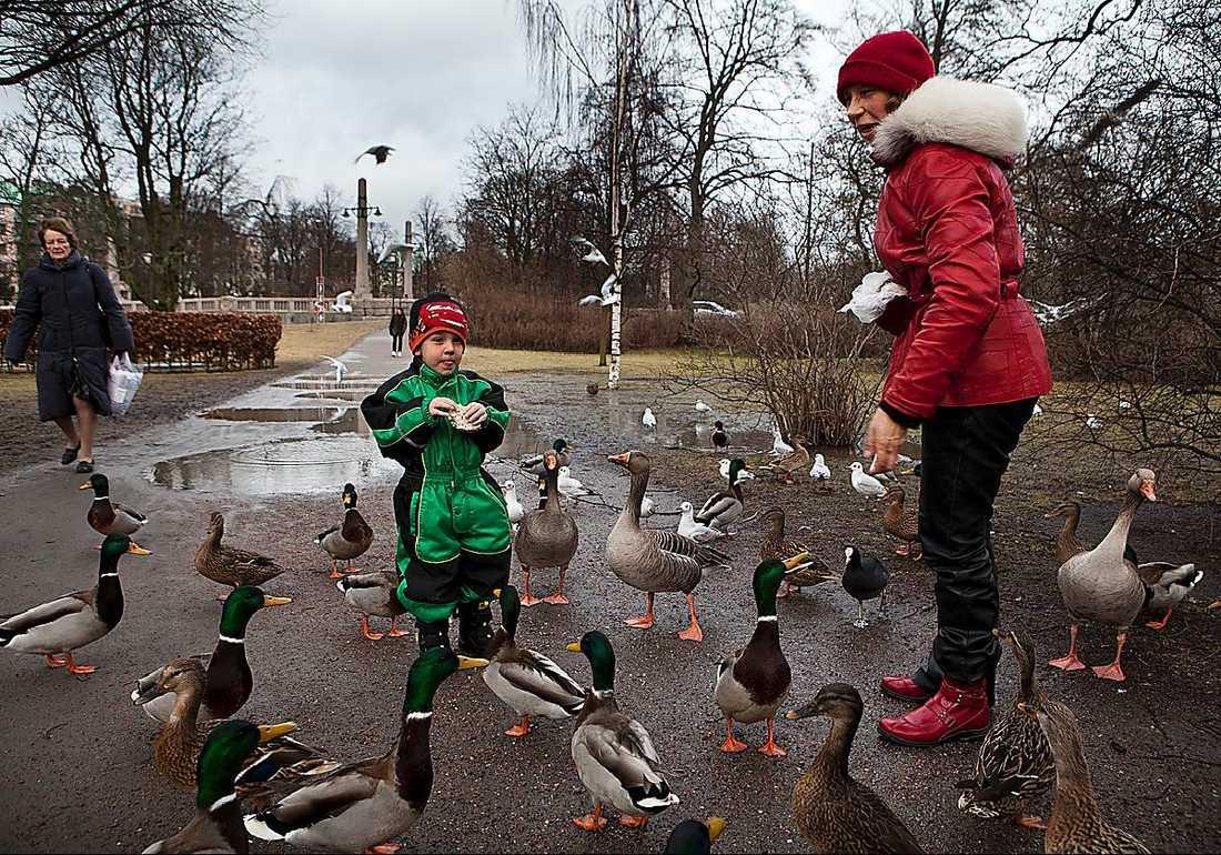 Sebastian, 3, matar fåglar med farmor Karin Nilsson i Malmö.