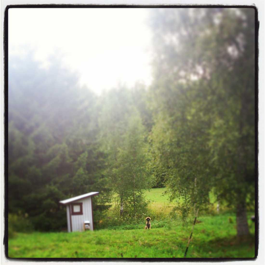 De värmländska skogarna utanför Årjäng