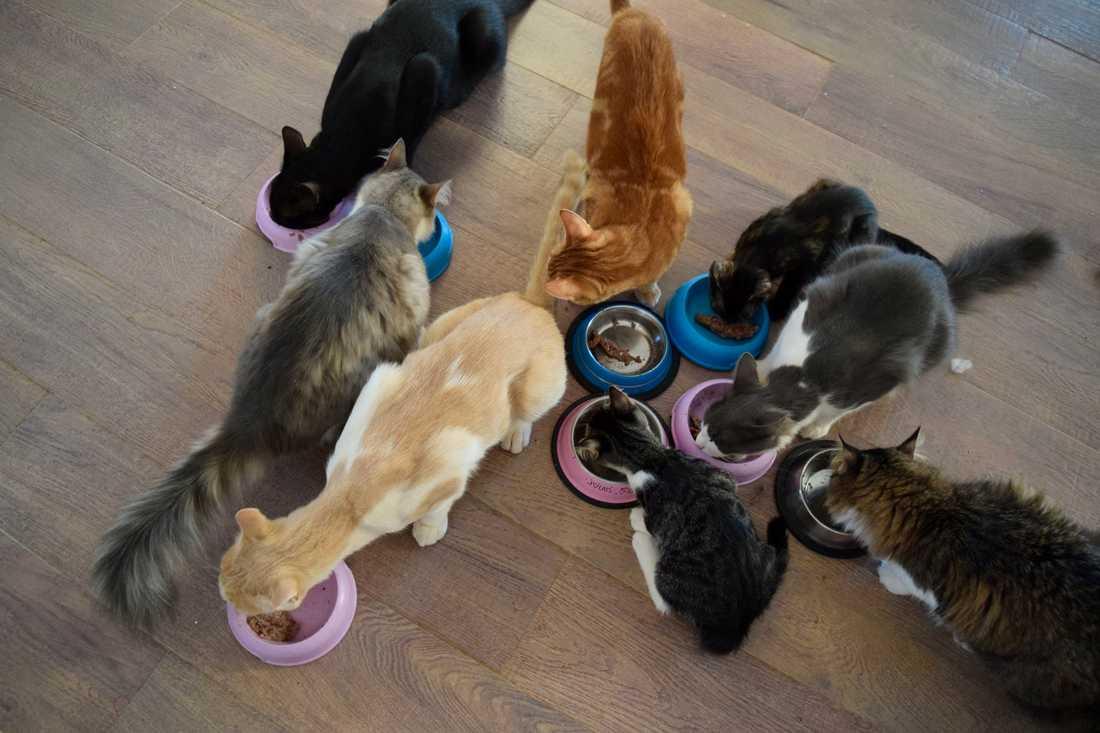 I arbetssysslorna ingår det att mata och medicinera katterna.