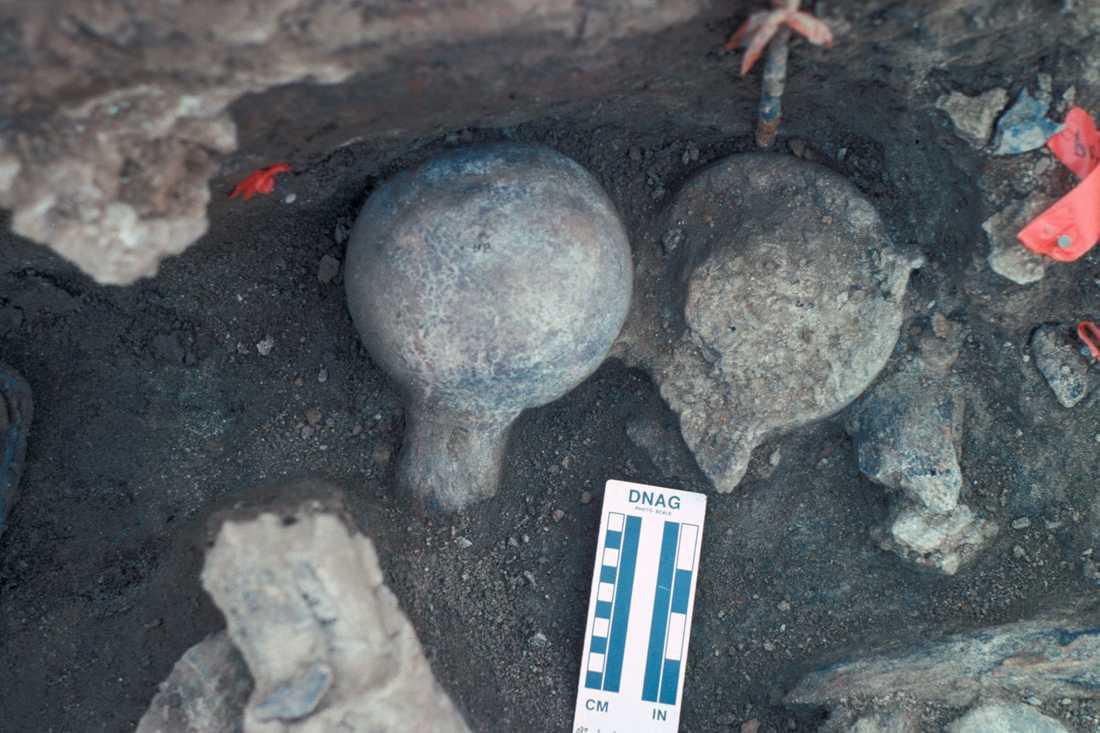 Lårbensbitar från mastodont funna vid utgrävningarna i Kalifornien.