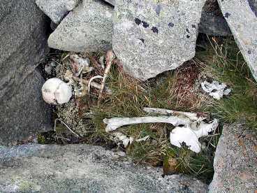 LÅG VID SVENSKA GRÄNSEN På fjället Tjaktja hundra meter från den norska gränsen hittades skelettet som tros härröra från andra världskriget.