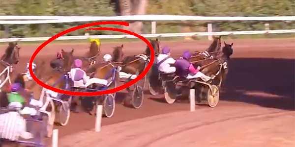 Junior Guelpas häst hamnar i galopp.