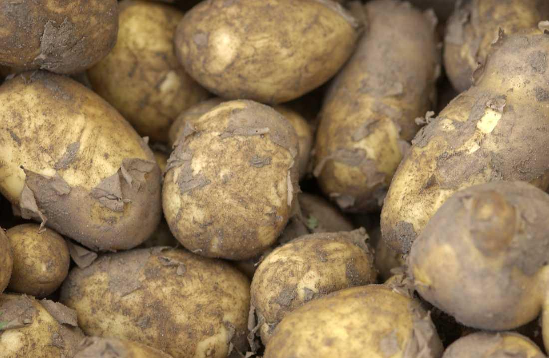 Livsmedelsverket ska utreda vilken mat vi behöver om kriget eller krisen kommer. Arkivbild.