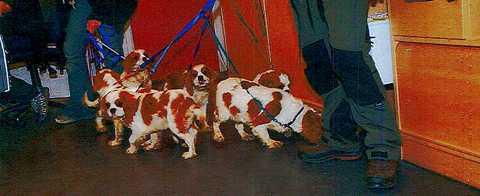 """Bit- och rivmärken visade att hundarna """"frenetiskt"""" försökt att krafsa sig ut genom garagedörren. Här är de på plats hos veterinär för vård."""