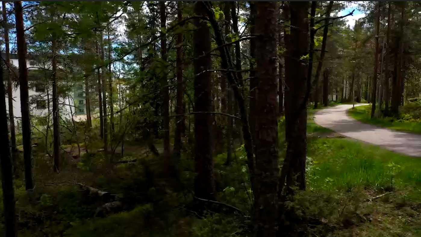 Amanda, 27, var ute med sin hund på en kvällspromenad i skogarna i Umeå.