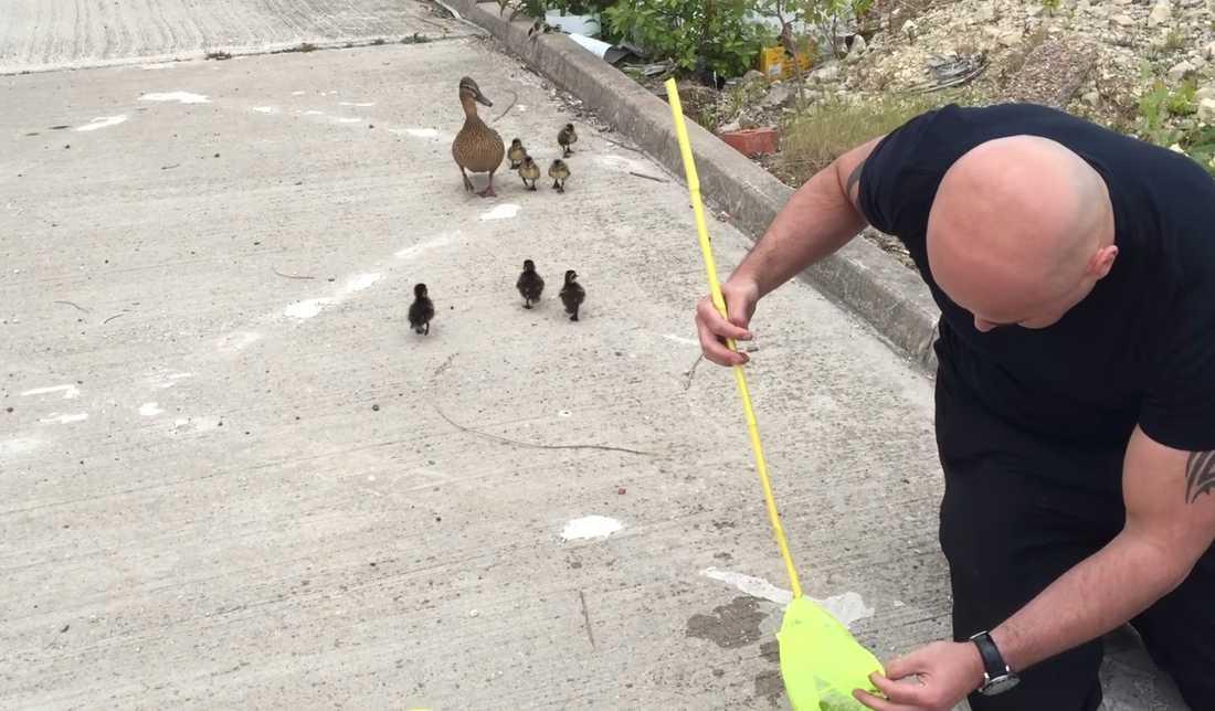 Här tittar några av de räddade ungarna på medan Gary räddar fler.