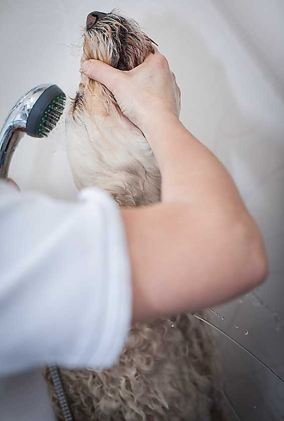 Livia får använda ett särskilt schampo för att minimera allergenmängderna.