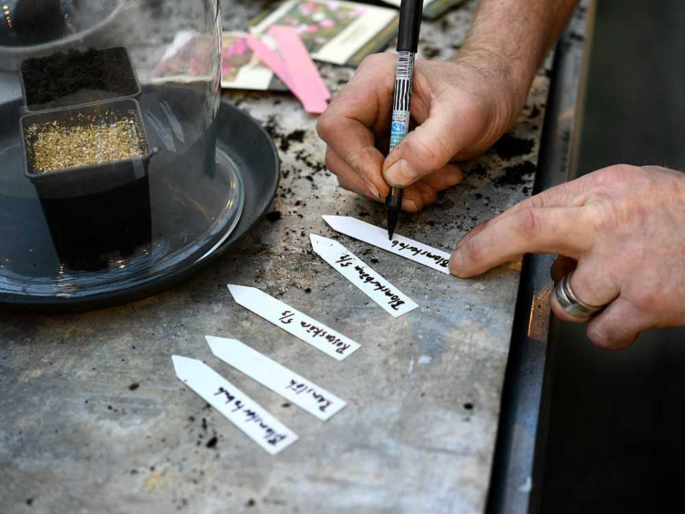 Skriv namnet på det du odlar och datum när du frösådde.