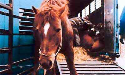 hur många hästar finns det i sverige