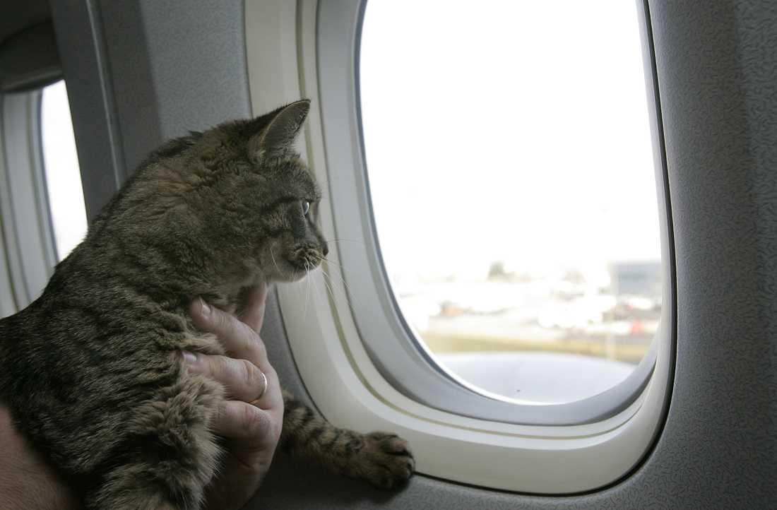 En rysk man straffas av flygbolaget Aeroflot sedan han kuppat in en katt som vägde för mycket. Arkivbild.