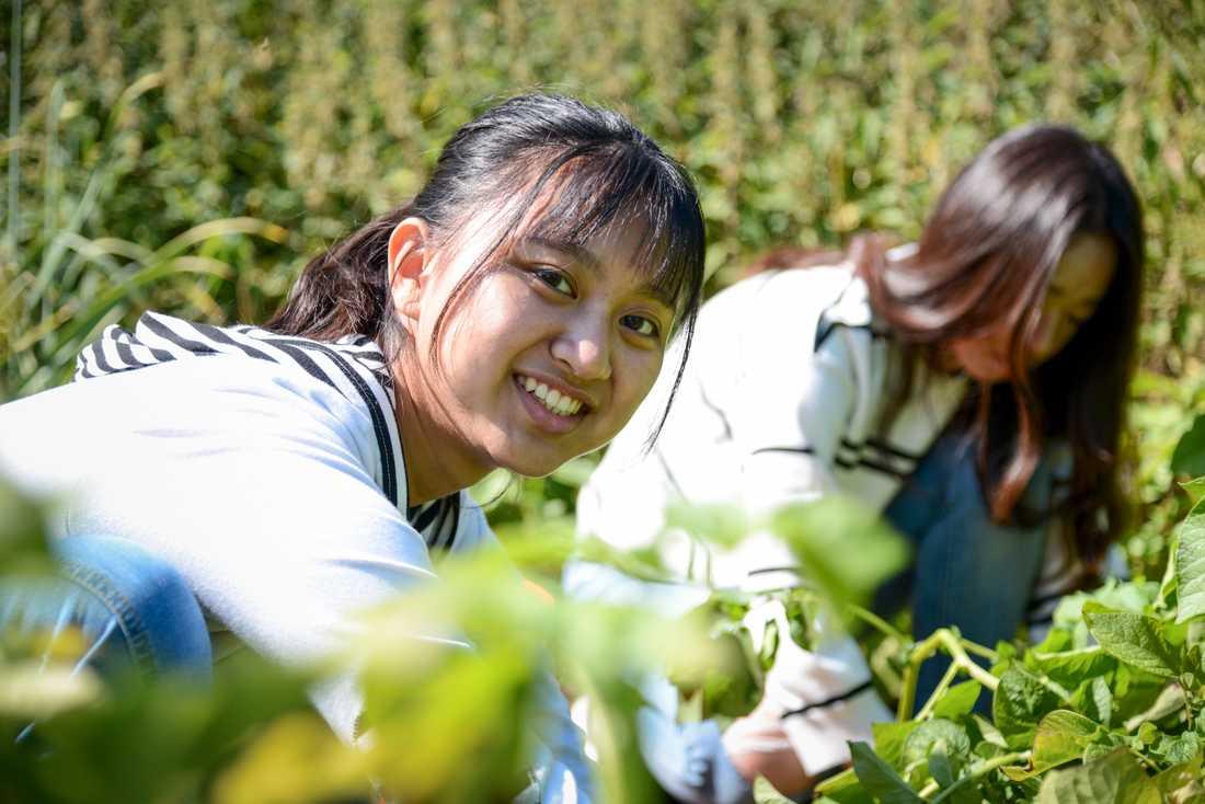 Lärorikt, tycker 18-åringarna Joy Chia-Ying Chung och Laura Tzu-Lun Hsu om arbetet på den lilla gården strax utanför Hörby.