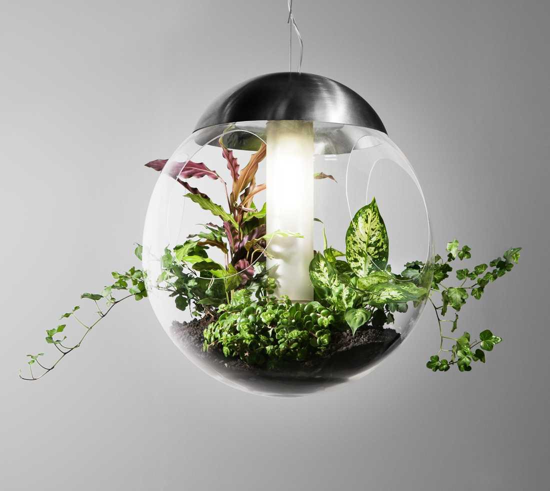 Babylone - en glob i plexiglas från Greenworks. Enkelt att plantera i och sköta. Foto: Sara Frank