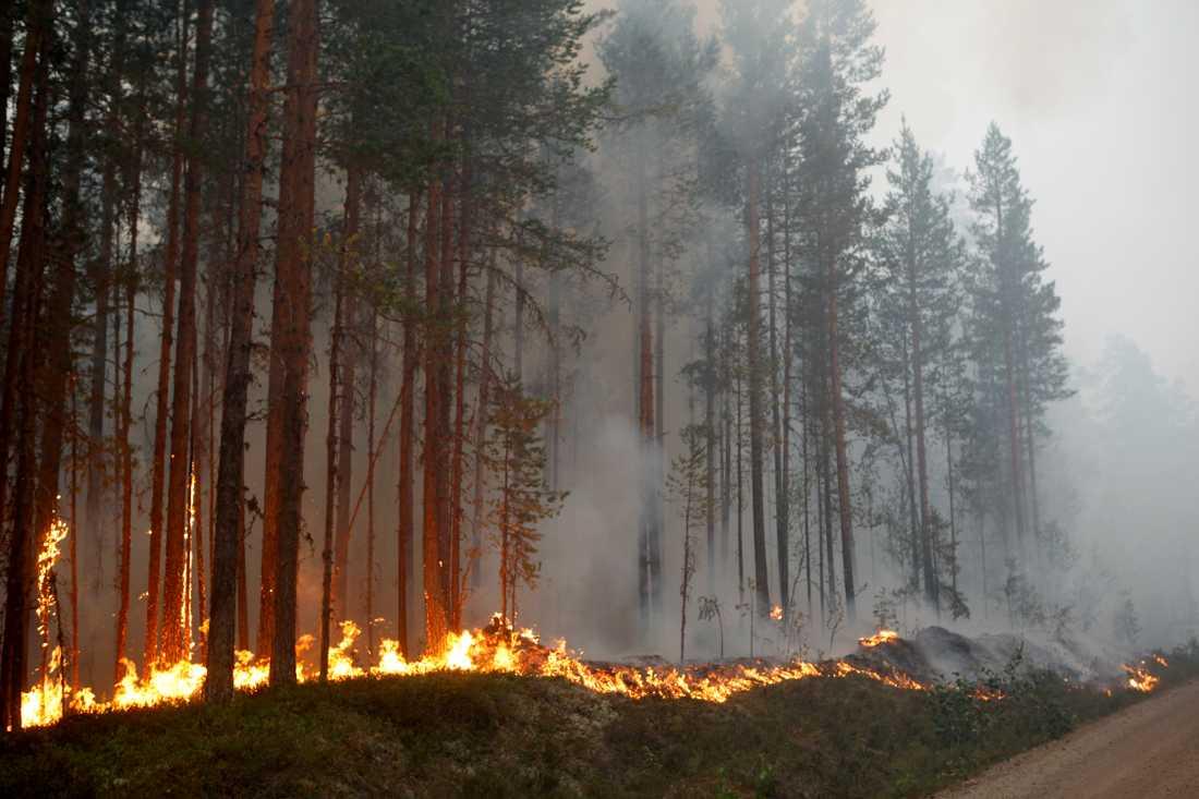 Skogsbranden i Kårböle strax utanför Ljusdal.