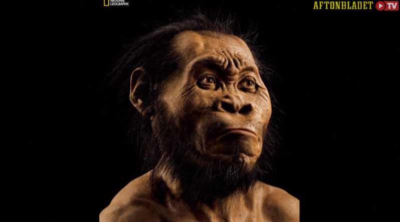 Så här tros den ha sett ut, Homo naledi.
