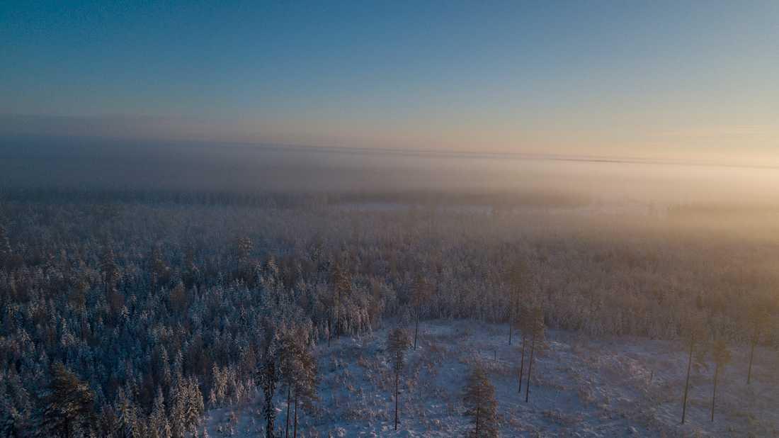Skogarna vid Kolsva.