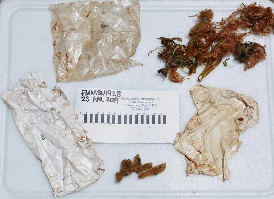 Två plastpåsar och en bit av en ballong hittades i magen.