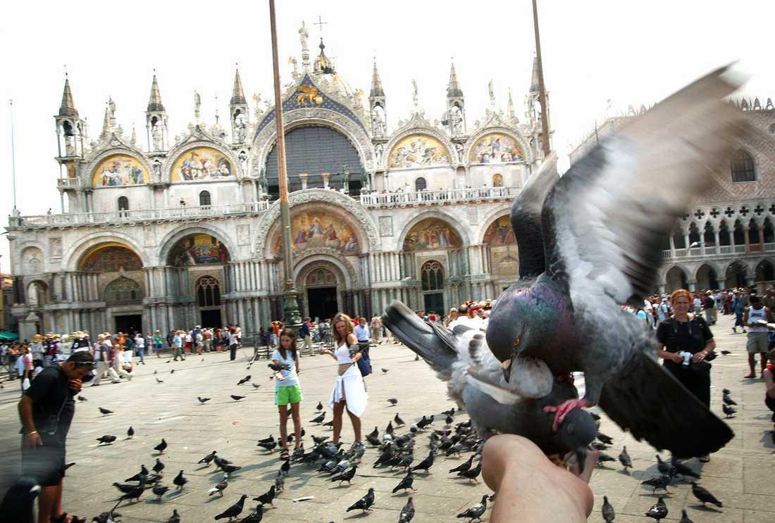 Duvorna Markusplatsen i Venedig är ökända.