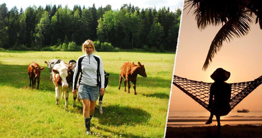 I ladugården mumsar mina kor på ensilage, ovetande om vilket hallå de skapar hos den grupp som har tolkningsföreträdet i Sverige i dag. Journalister, politiker och proffstyckare. En elit utan synbar förankring på landsbygden, skriver lantbrukaren Anette Gustawson.