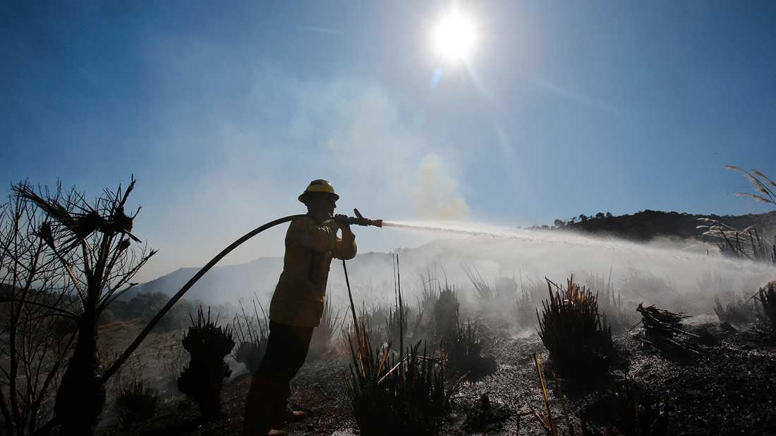 En brandman bekämpar skogsbränderna i Kalifornien.