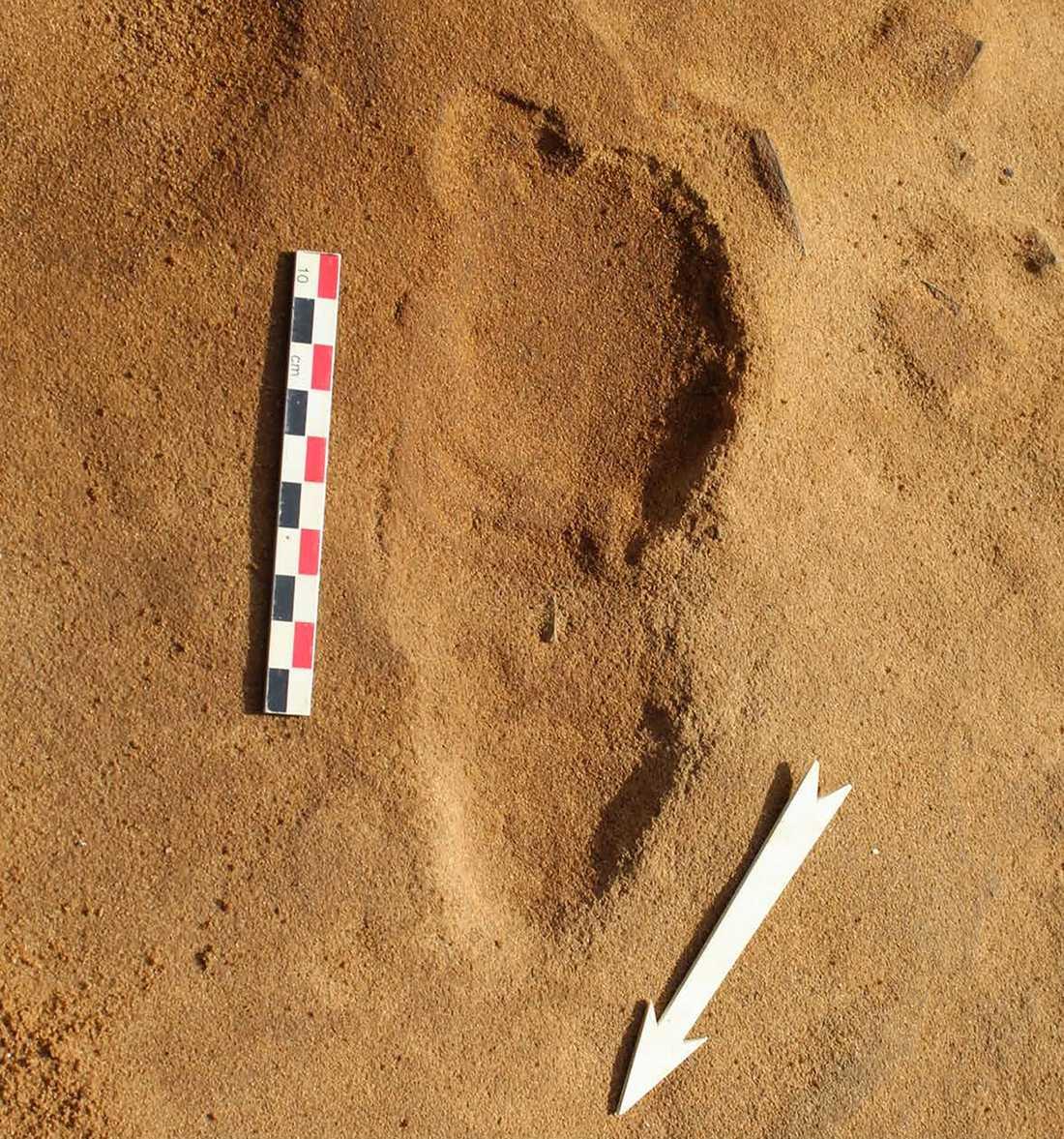 I 80000 år har detta fotavtryck från en neandertalare, som var mer bredfotad än vi, bevarats i sanden i Normandie där det nu har upptäckts tillsammans med 256 andra avtryck.