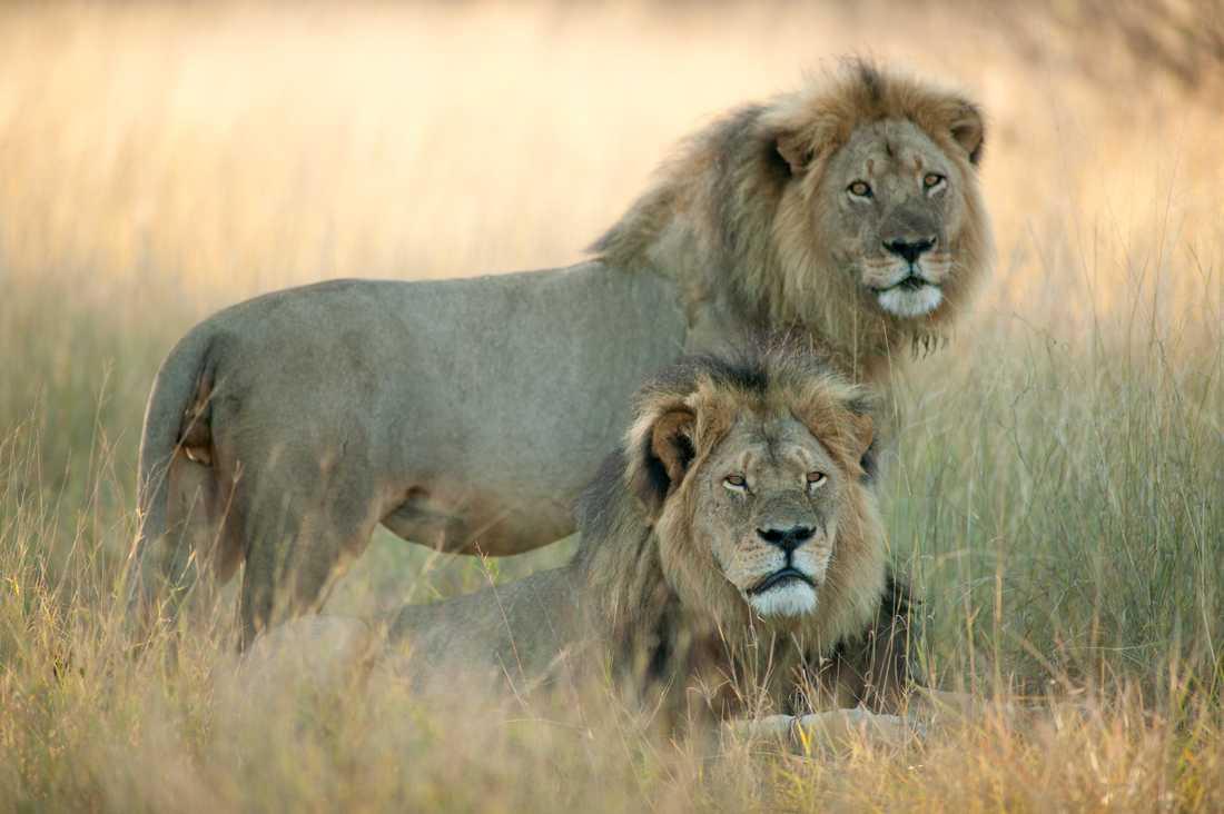 Jericho och Cecil tillsammans.