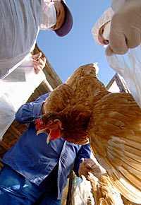 Nu växer oron för att fågelinfluensan kan ha smittat mellan människor.